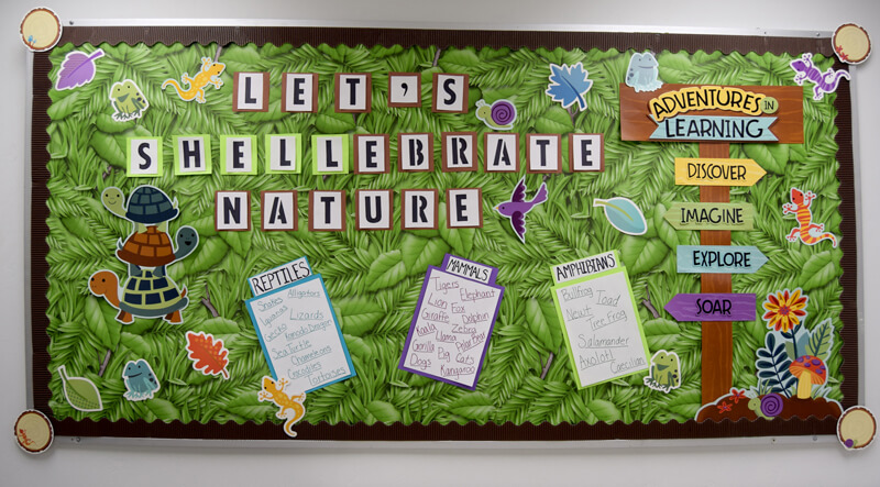 "Let's ""Shellebrate"" nature!"